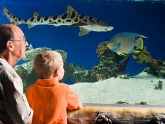 abuelo y nieto en acuario
