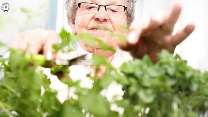 anciana cuidando de sus plantas