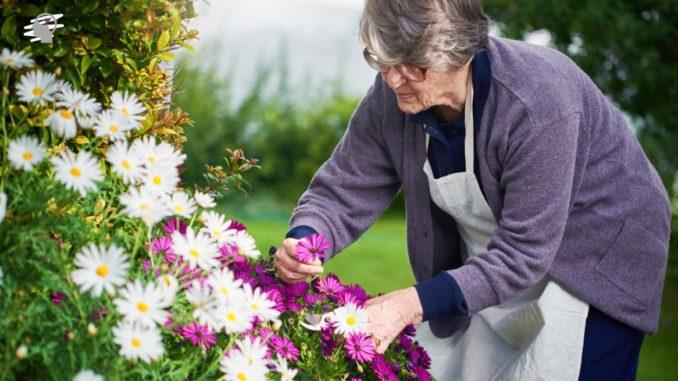 jardineria anciana