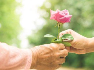 regalar flor