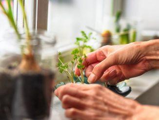 jardineria personas con demencia